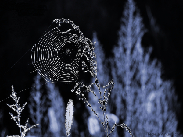 Aminus3 Featured photo Black  web... | 14 October 2014