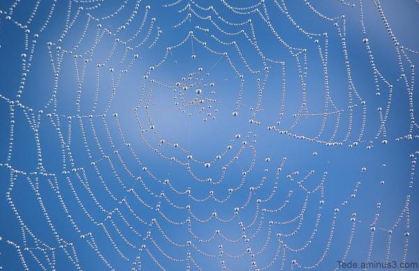 Toile d'araignée et rosée