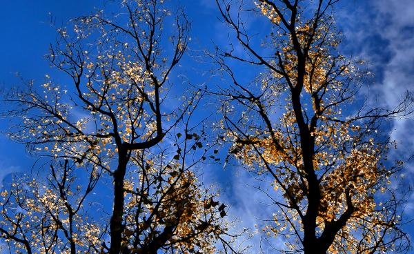 De  l'or  dans  les  branches...
