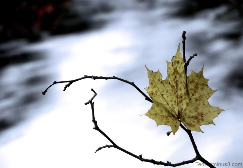 L'automne  est  un  andante  mélancolique...