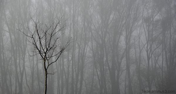 Arbres et brume