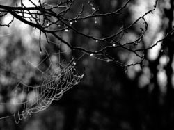 The  spider  web...