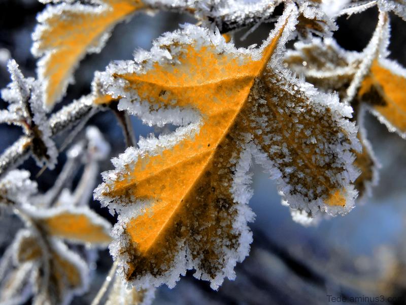 Rencontre  de  l'automne  et  de  l'hiver...