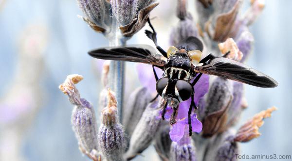 Délicieux  nectar...