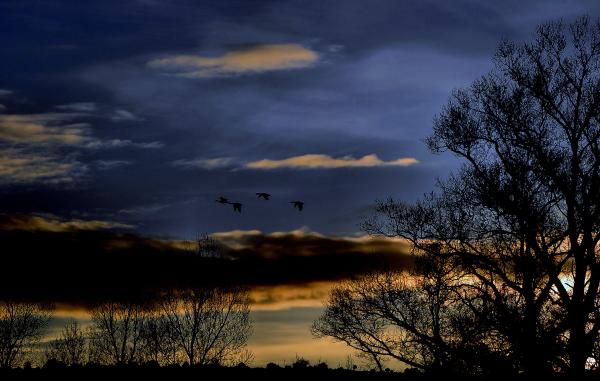Les oiseaux du crépuscule