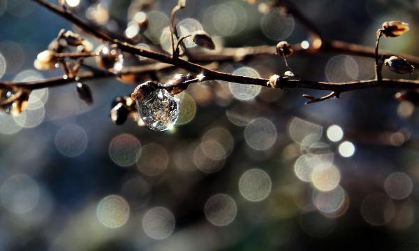 Goutte de pluie gelée