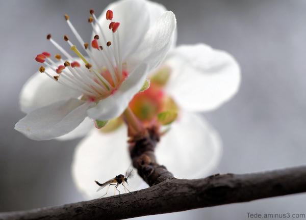 Fleur et moustique
