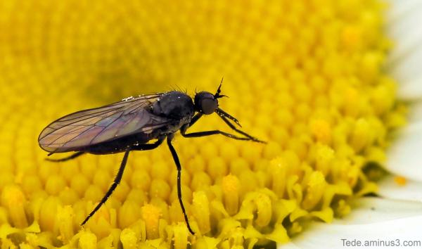 Insecte et marguerite