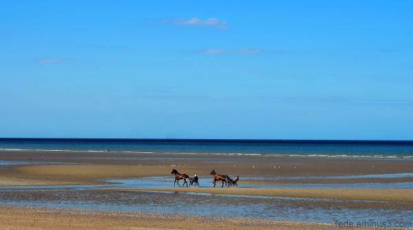 Chevaux sur une plage de la Manche