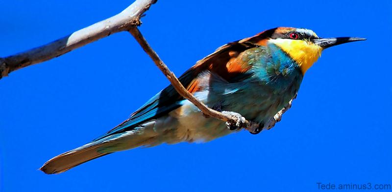 Le  petit  oiseau  de  toutes  les  couleurs...