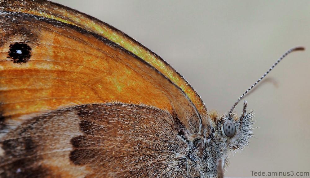 Gros plan sur le papillon