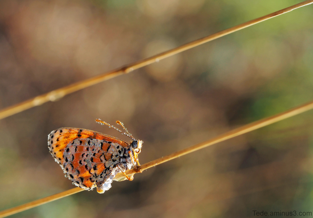Papillon et gouttes de rosée