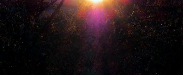Soleil dans les feuilles