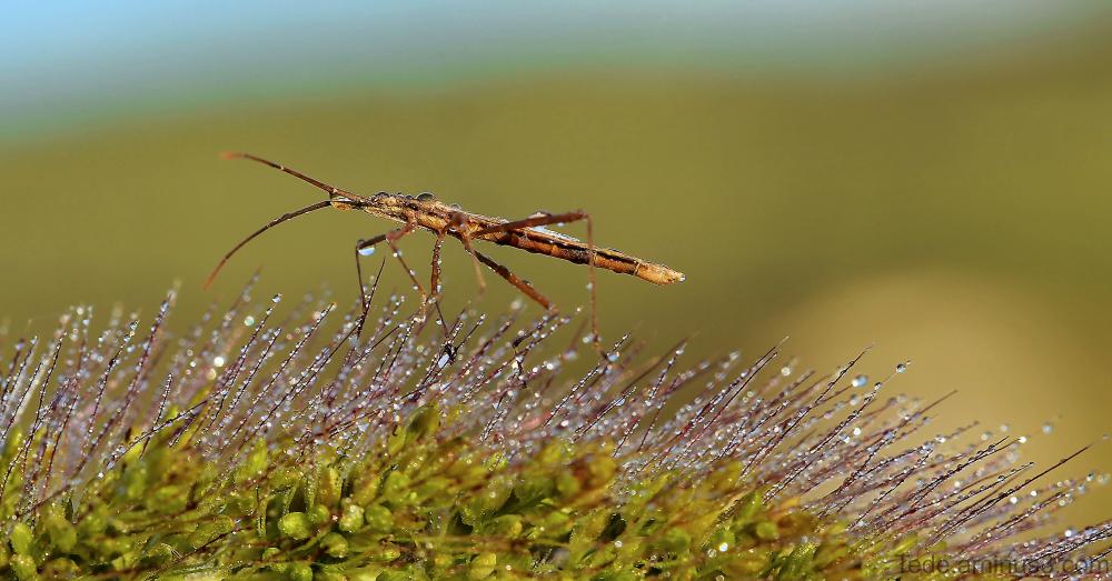 Insecte et gouttes de rosée
