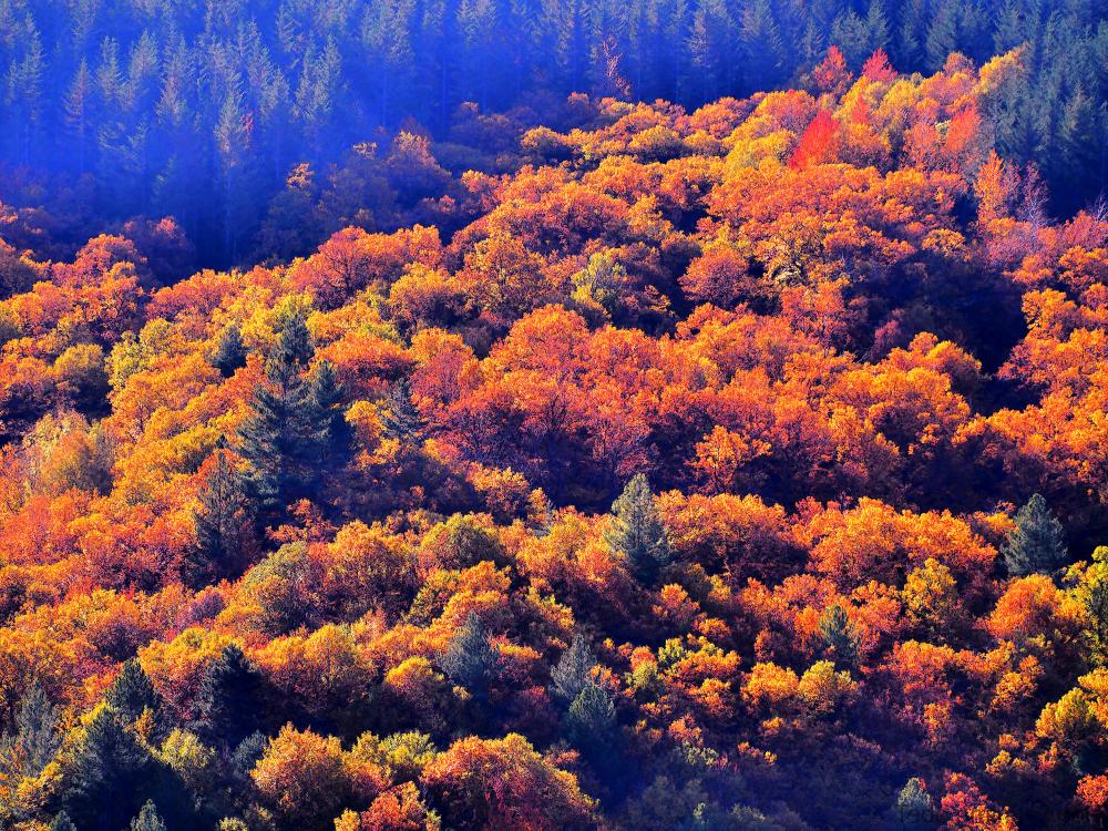 La forêt a pris ses couleurs automnales