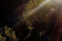 Lumière  surgissant  de  l'ombre...