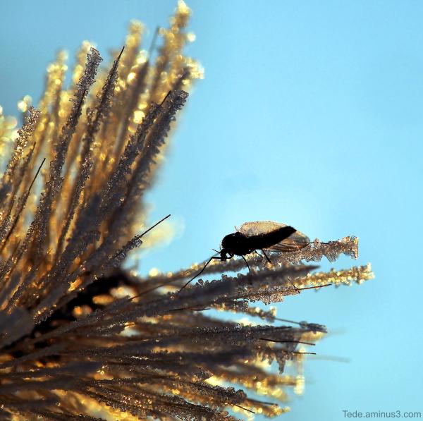 Insecte et givre