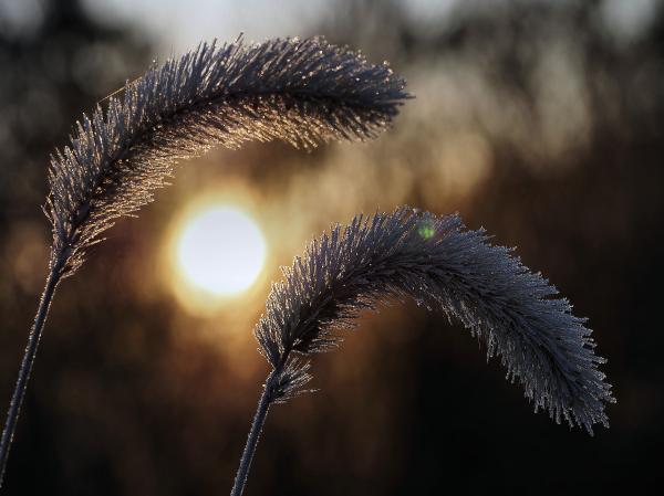 Givre et soleil