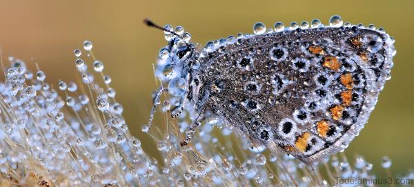 Papillon dans la rosée du matin