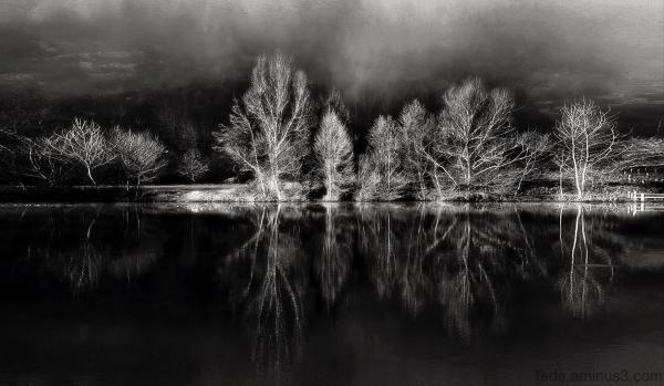 Arbres et reflets