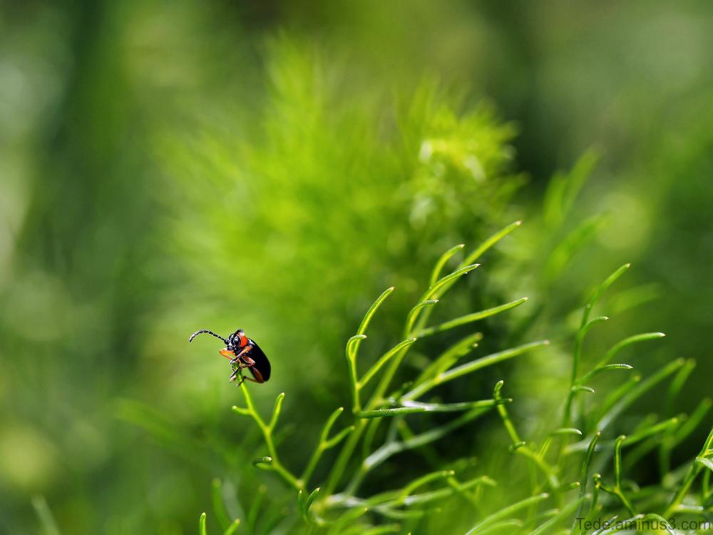 Insecte dans l'herbe