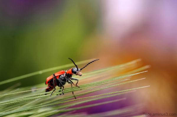 Insecte sur une herbe