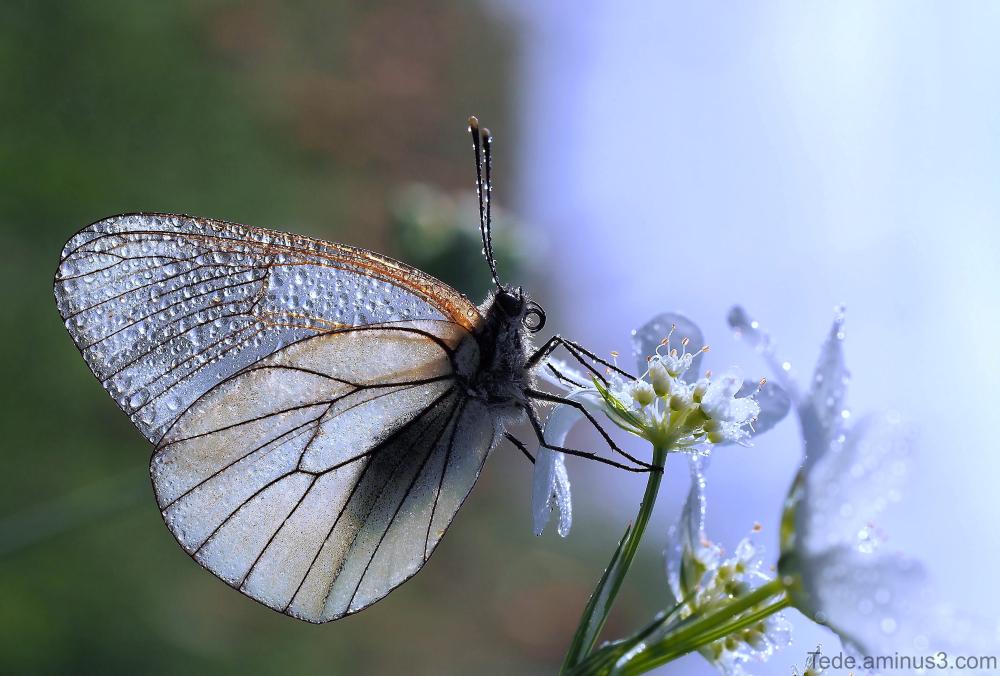 Papillon et brume
