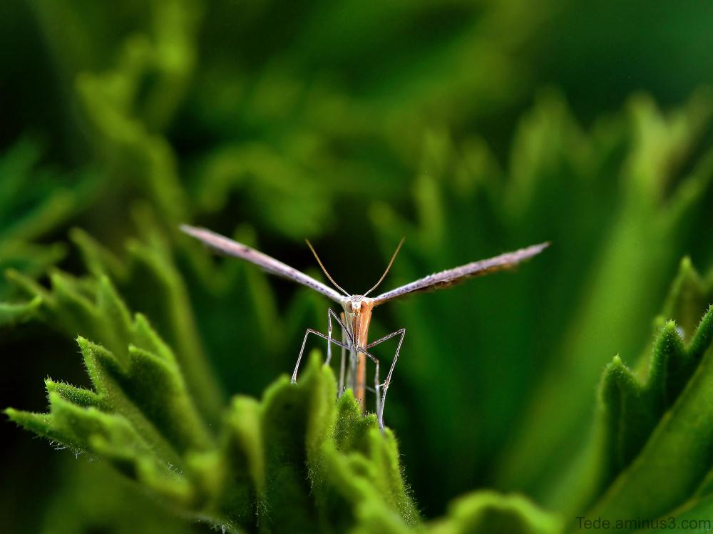 Papillon dans un géranium