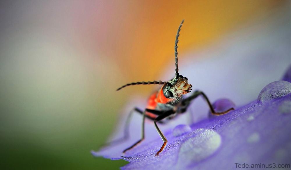 Insecte sur une fleur d