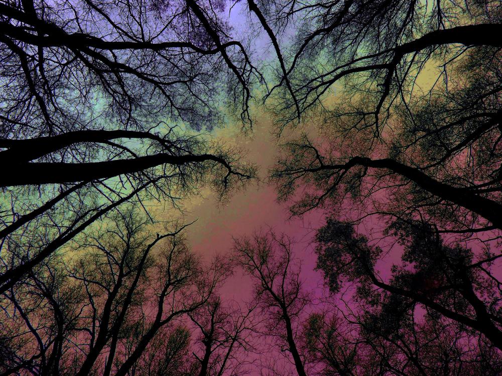 Le haut des arbres