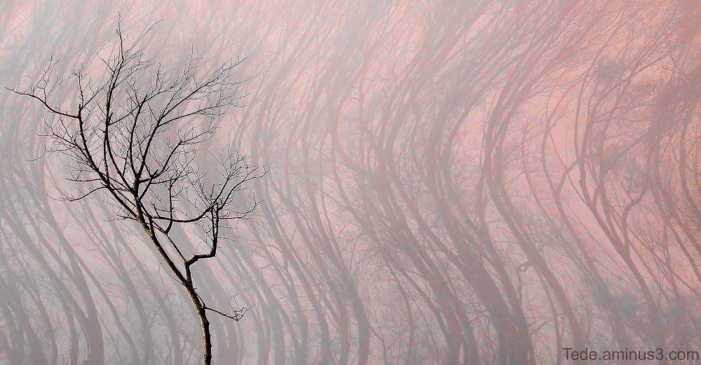 Arbres dans le vent
