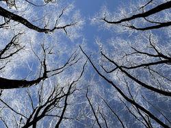 Implorer  le  ciel...
