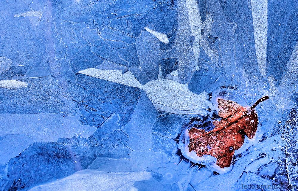 Feuille prise dans la glace