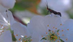 The  awakening  of  spring...