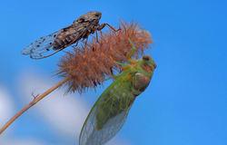 The fairies of summer...