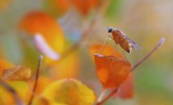 First days of autumn...