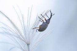 Parachute descent...
