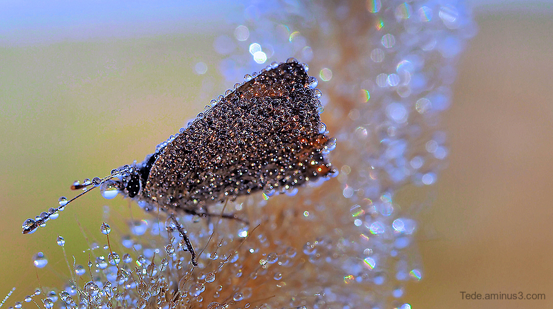 Butterfly in the few drops
