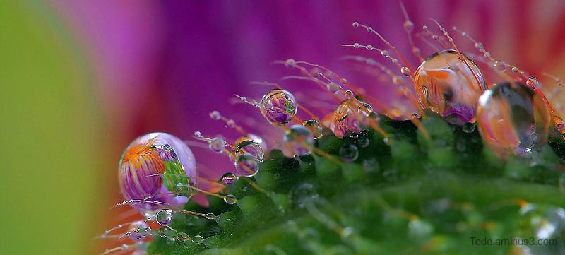 Reflections in rain drops