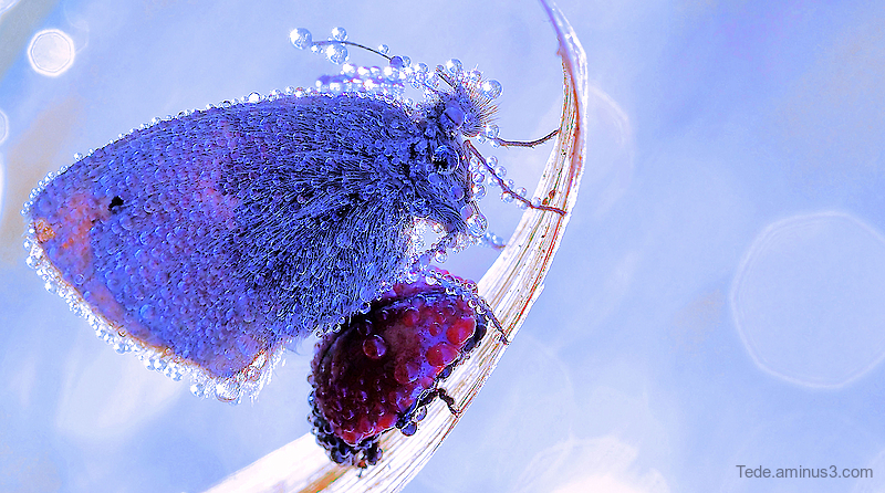 Butterfly and ladybug trapped in dew