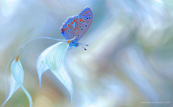 Butterfly in the wind
