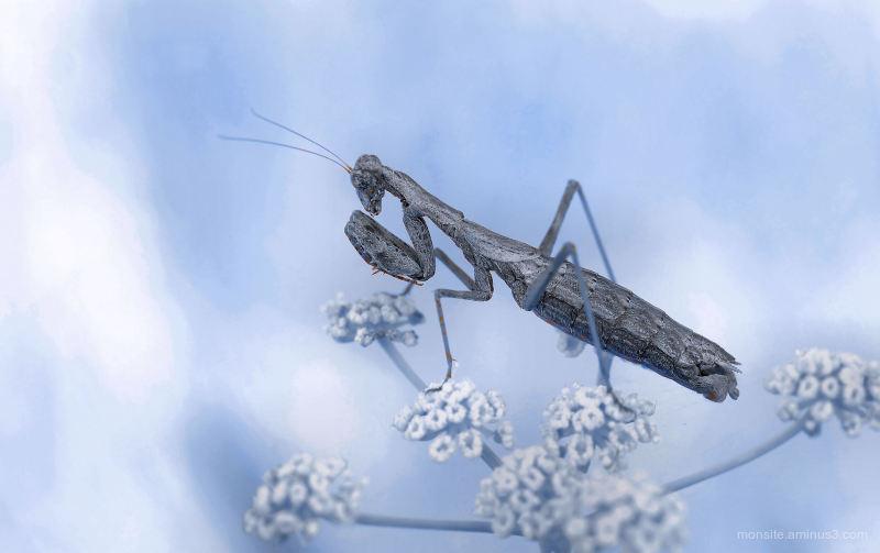Mantis prayer