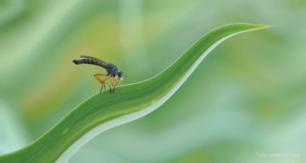 An insect that seems to be surfing on a leaf !!!