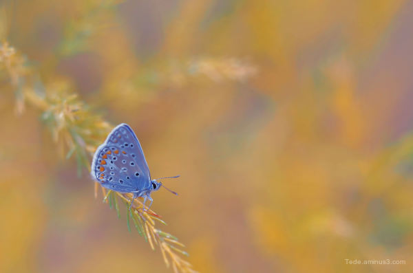 A butterfly in autumn !!!