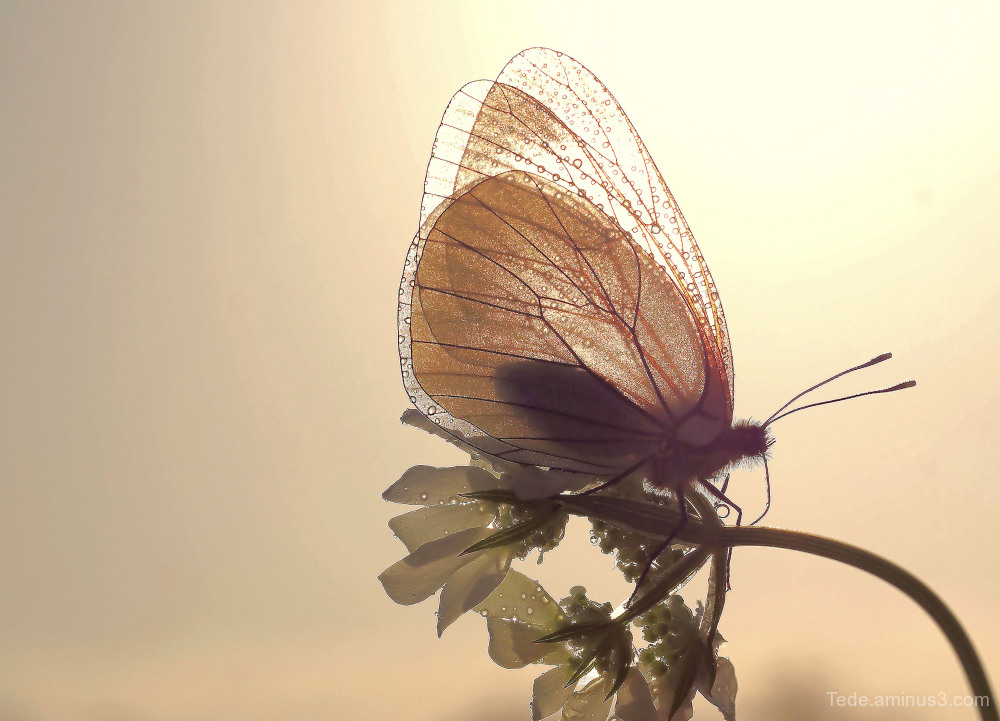 Butterfly in the sun !!!