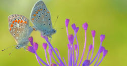 Butterflise in love !!!