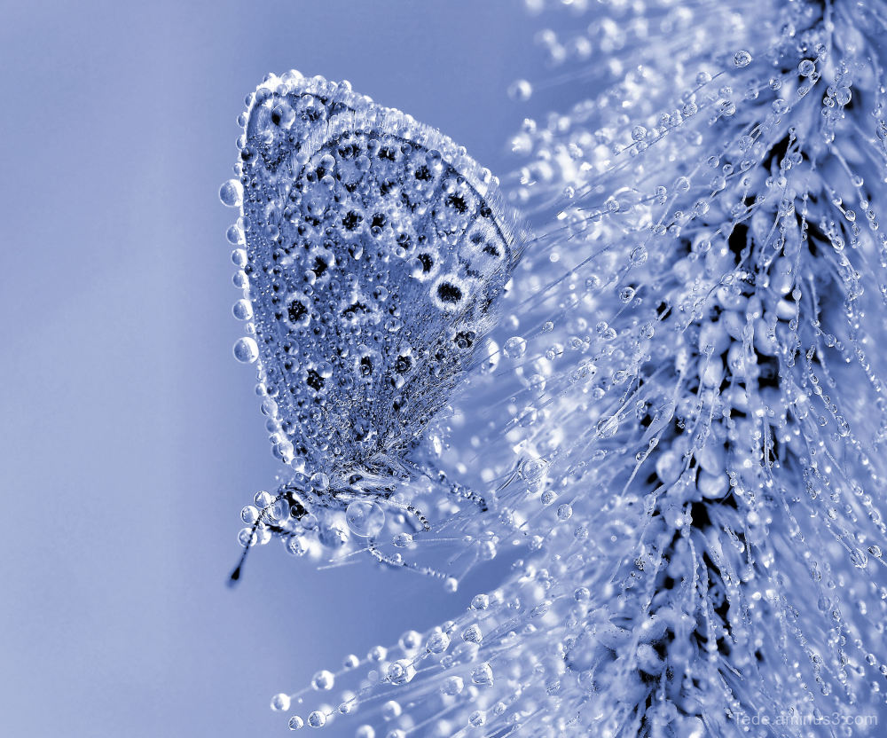 Butterfly and dew drops !!!