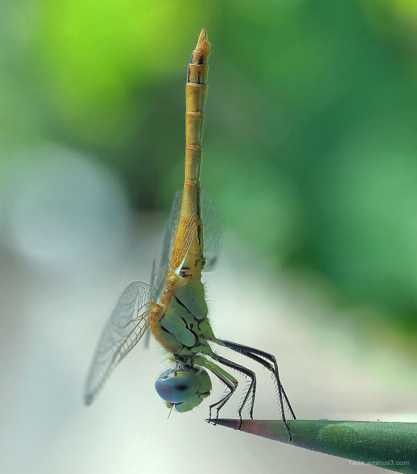 Dragonfly !!!