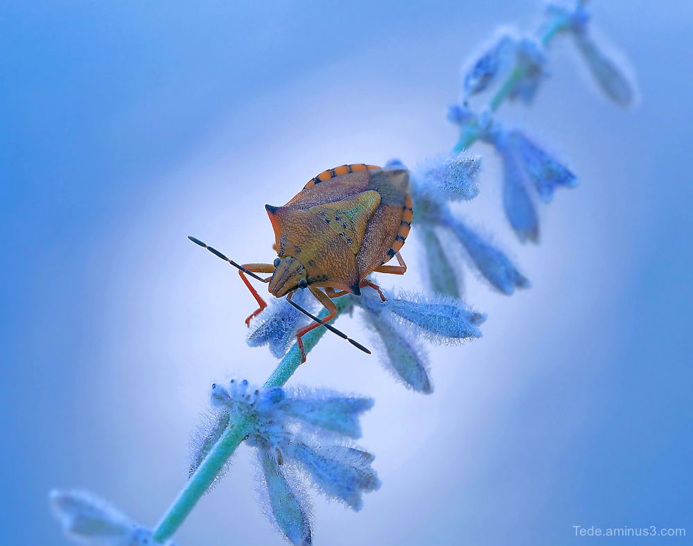 Bug !!!