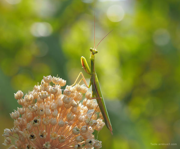 Mantis prayer !!!